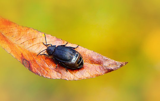 Autumn, Seasons Of The Year, Leaf, The Beetle, Antennae