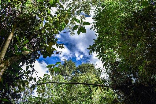 Pasochoa, Trees, We Will, Landscape, Tree