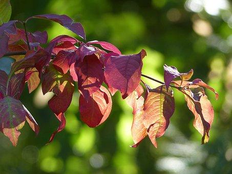 Autumn, Nature, Forest, Trees, Mood, Leaves, Light