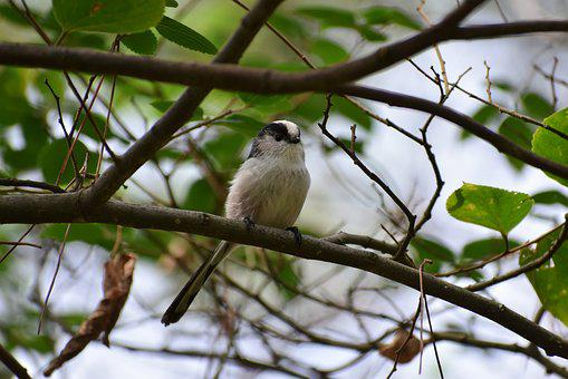 Animal, Forest, Trees And Plants, Bird, Wild Birds