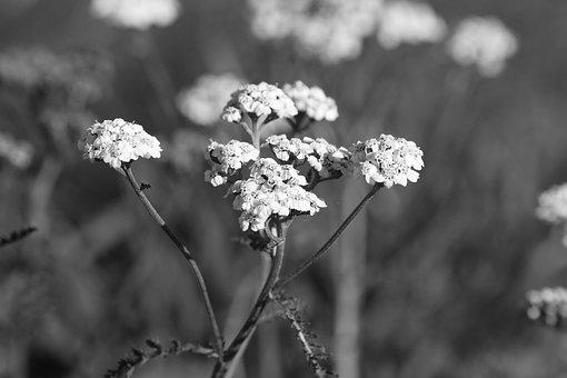 Wild Flower, Nature, Plant, Autumn