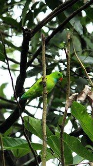 Vernal, Hanging, Parrot, Avian, Bird, Parakeet, Plumage