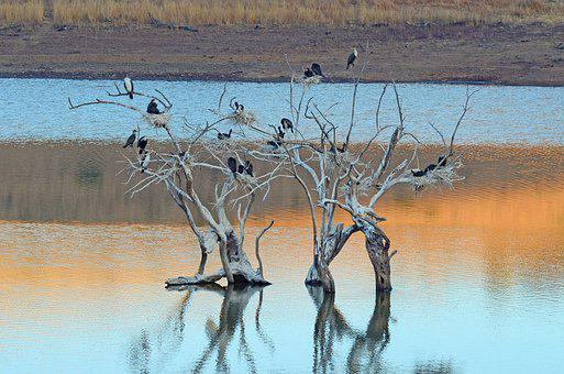 African, Birds, Roosting, Tree, Reflection, Water, Lake