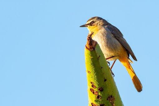 Animal, Avian, Beak, Beautiful, Bird, Blue, Branch
