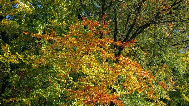 Autumn, Fall Leaves, Bright, Colorful, Autumn Mood