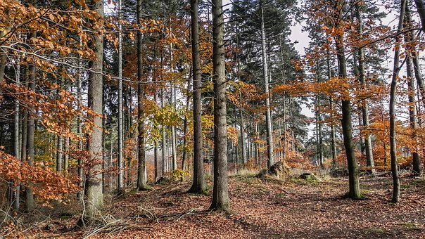 Autumn Forest, Colorful, Fall Foliage, Leaves