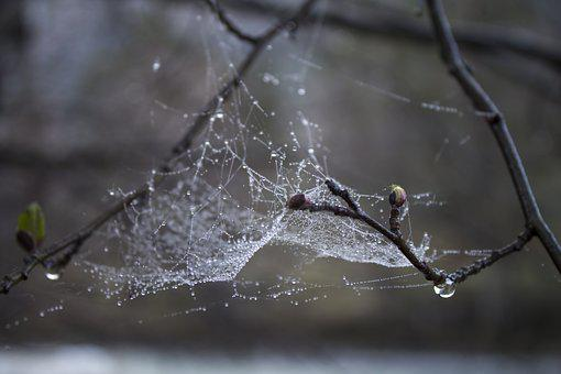 Spider Web, Drops, Macro, Spring, Dewdrop, Nature, Wet