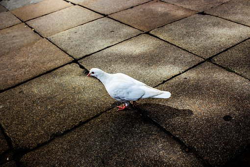 Dove, Historic Center, Ground, Stone Floor, White