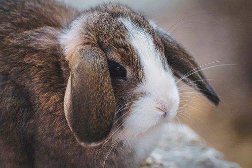Rabbit, Ears, Hare, Animal, Animal World, Mammal, Cute
