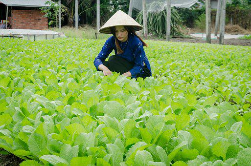 Girl, Farmer, The Cultivation, Clean Vegetables, Reform