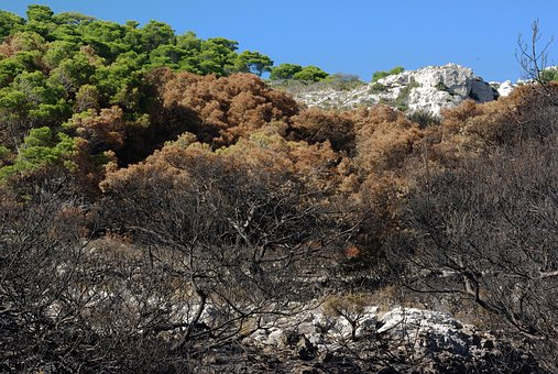Pinewood, Fire, Burned, Pine, Marseille, Cove, Mounine