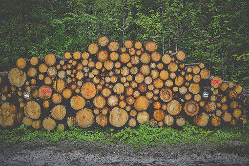 Wood, Firewood, Stack, Forestry, Tree Trunks