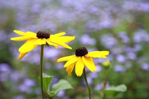 Flowers, Wildflower, Nature, Plants, Petal, Garden