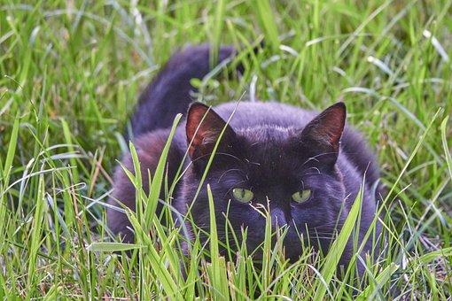 Cat, Field, Lauer, Hunt, Pet, Meadow, Cat's Eyes, Green