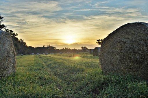 Bales, Hay, Autumn, Harvest, Nature, Landscape, Field