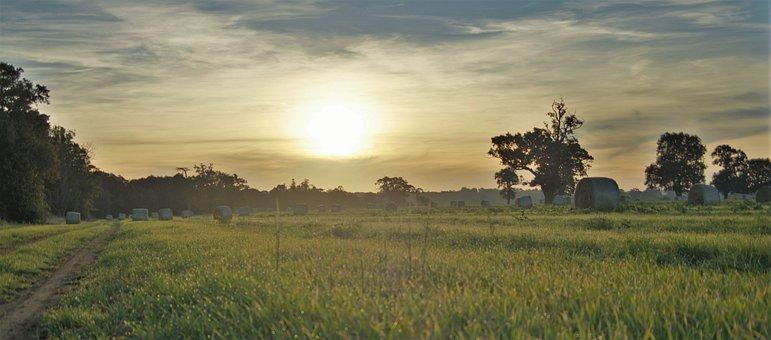 Autumn, Harvest, Field, Farmland, Nature, Landscape