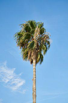 Palm, Tree, Nature, Tropical, Summer, Leaves, Marine