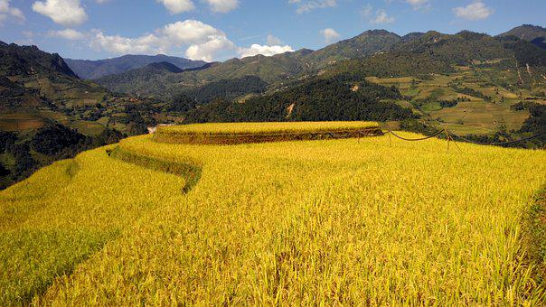 Terrace, Rice Field, Mountain, Rice, Vietnam, Travel