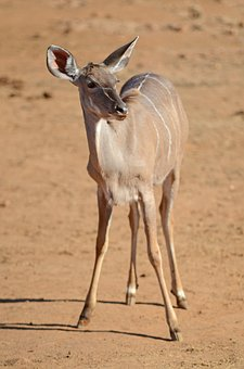 South Africa, Pilanesberg, Safari, Nature, Animal, Wild