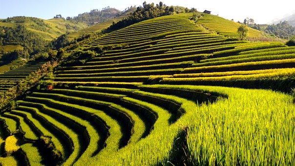 Terraces, Travel, Rice Field, Vietnam, Nature