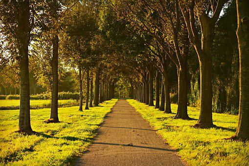 Trees, Lane, Tree Lined, Road, Field, Perspective