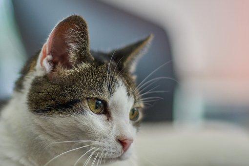 Cat, Pet, Meadow, Cat's Eyes, Green, Watch, Face