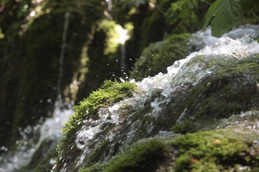 Water, Green, Nature, Landscape, Summer, Wet