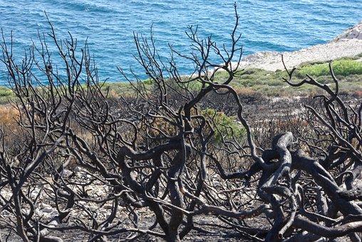 Ravaged, Fire, Wood, Cove, Shrub, Sea, Marseille