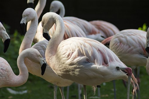 Flamingo, Zoo, Bird, Pink, Feather, Exotic