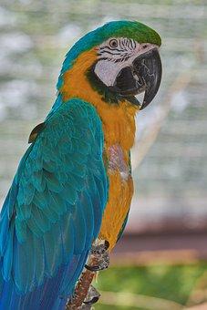 Parrot, Sit, Bird, Ara, Beautiful, Color, Branch, Wait