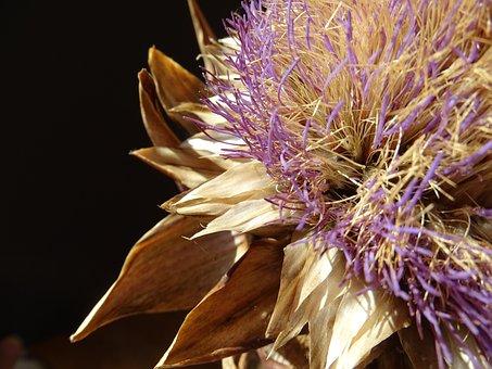 Artichoke, Blossom, Bloom, Dried, Purple, Bloom