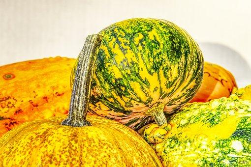 Pumpkin, Decorative Squashes, Decoration, Autumn