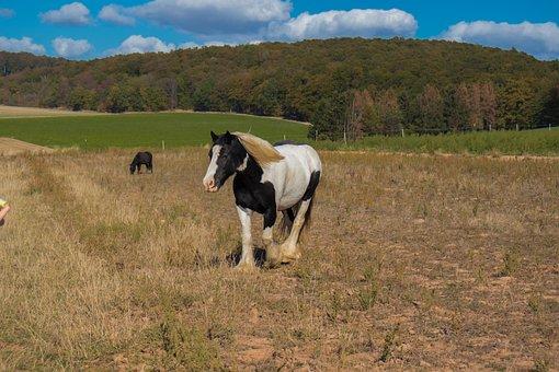 Horse, Nature, Animal, Mane, Pasture, Demeter Farm
