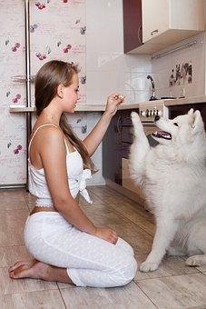 Girl, Dog, Kitchen, Summer, Entertainment, Friendship