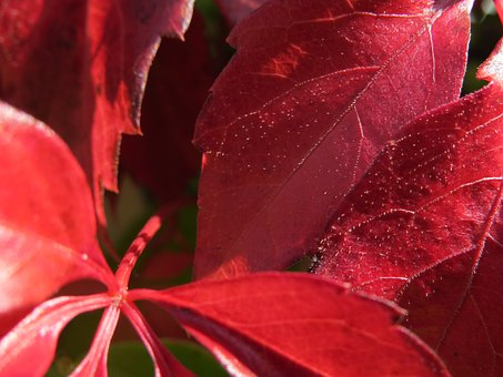Fall Foliage, Red, Autumn, Wine Partner
