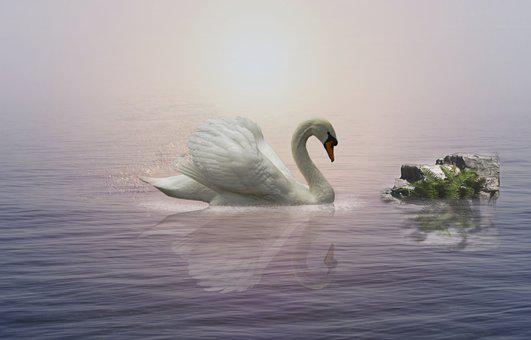 Swan, Water, River, Foggy, Wings, Feather, Lake