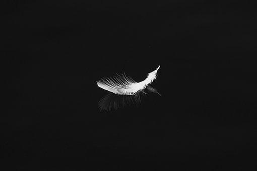 Feather, Bird, Nature, White, Symbol, Structure