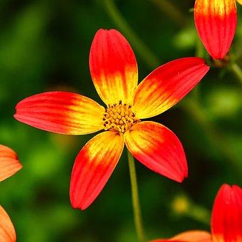 Flower, Nature, Garden, Ant, Summer, Red, Yellow