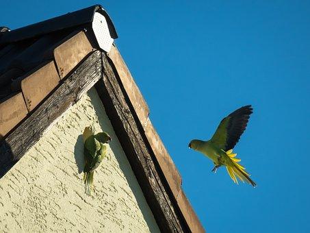 Parrot, Nest Building, Communication, Flying, Entertain