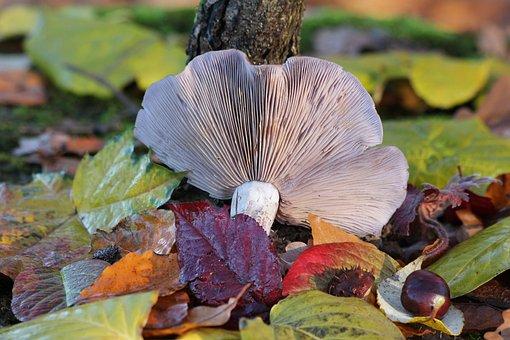Mushroom, Forest Mushroom, Fall Foliage, Leaves