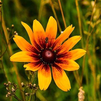 Flower, Nature, Garden, Fly, Summer, Yellow, Red