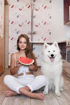 Girl, Dog, Kitchen, Summer, Entertainment, Watermelon