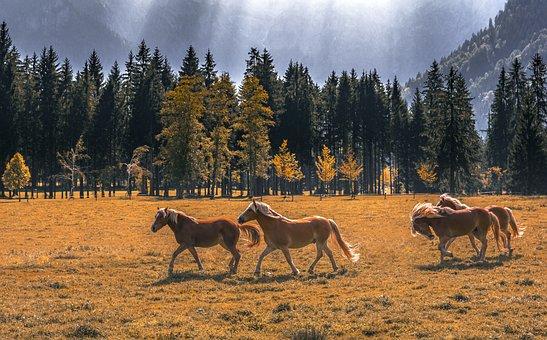 Horses, Meadow, Nature, Animals, Landscape, Pasture