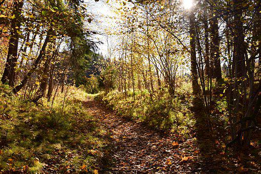 Nature, Autumn, Fall, Landscape, Forest, Trees, Leaves