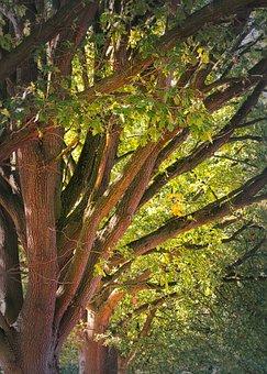 Trees, Aesthetic, Oak, Landscape, Branches, Log