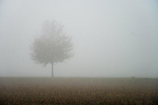 Fog, Autumn, Tree, Landscape, Nature, Mood, Haze
