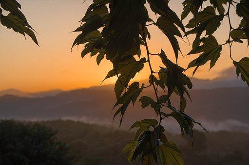 Sunset, Mountain, Branch, Leaves, Mist
