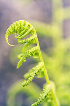 Macro, Fern, Green, Young, Spring, Plant, Forest, Leaf