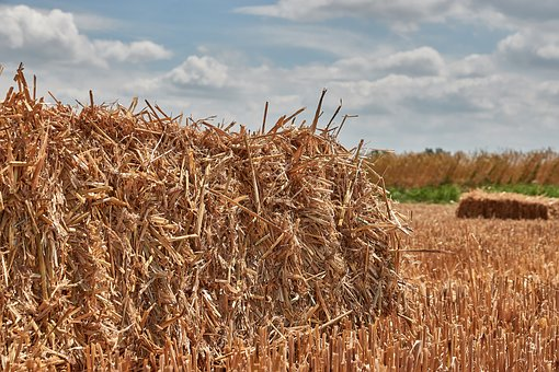 Straw, Harvest, Straw Bales, Agriculture, Field