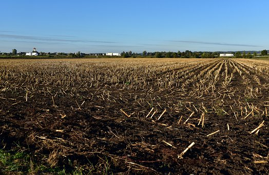 Stubble, Field, Harvested, Earth, Agriculture
